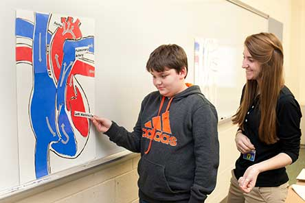 Student at white board putting labels on heart model