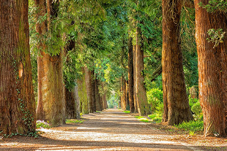 trees lining both sides of path