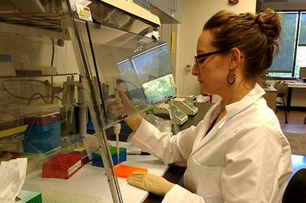 Graduate Student Meaghan Bird working under a PCR hood
